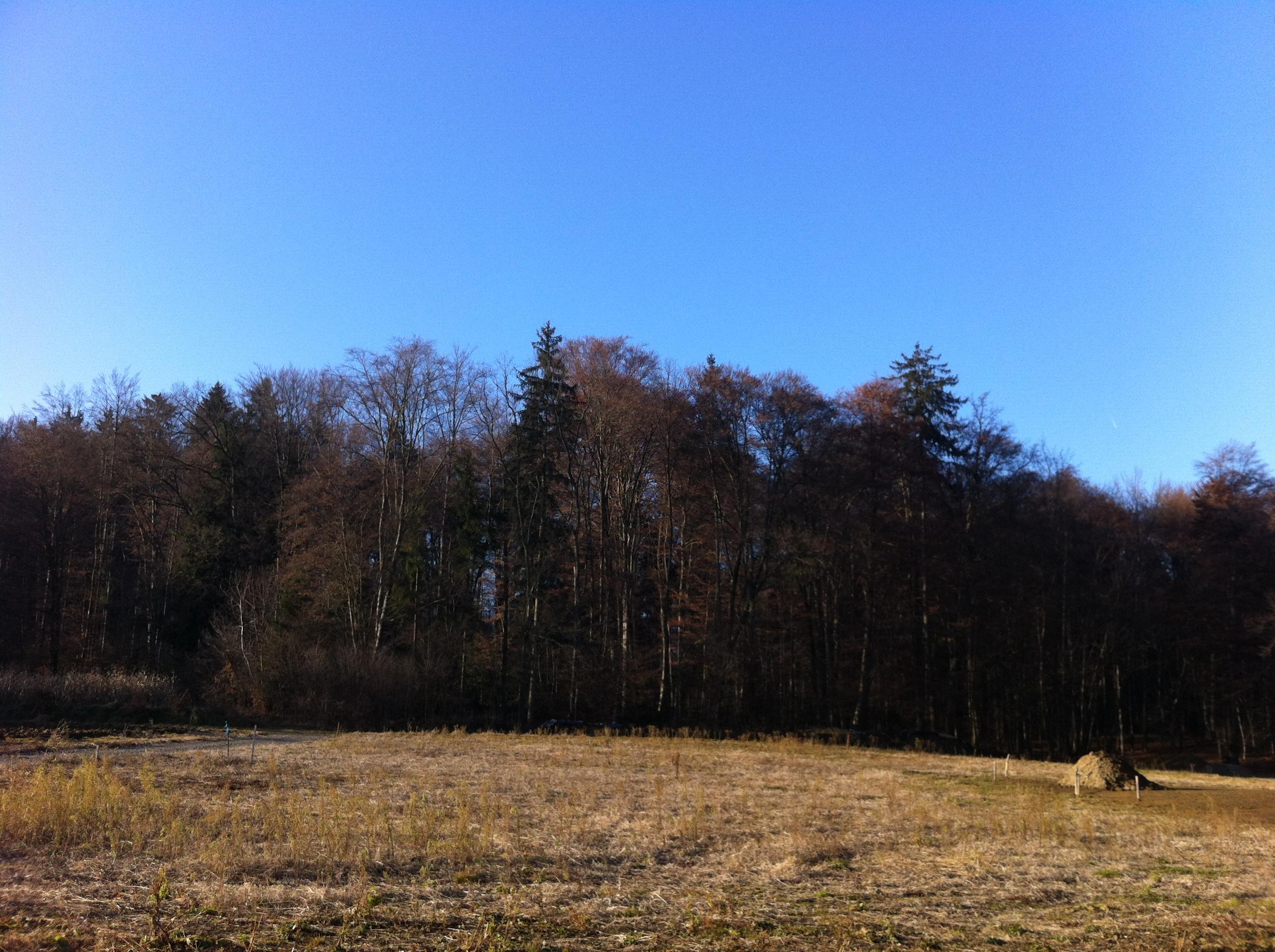 Sch 246 Nes Ruhiges Sonniges Grundst 252 Ck In Ehrenhausen